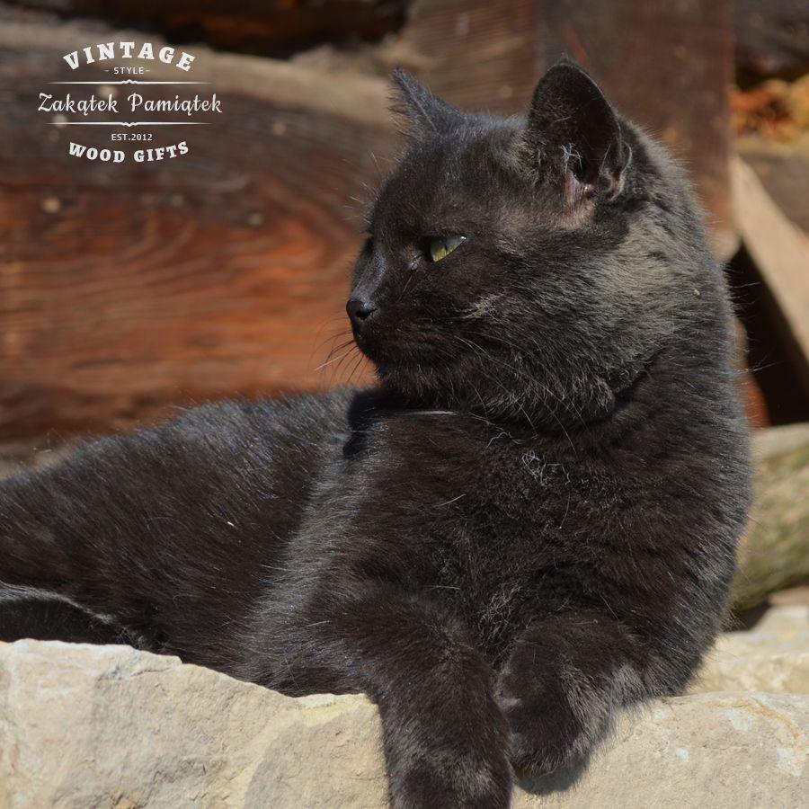 Nasz Kotek Frotka z Fundacji Felineus