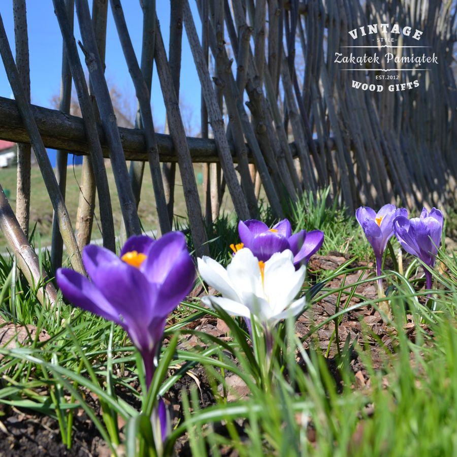 Czy to już wiosna