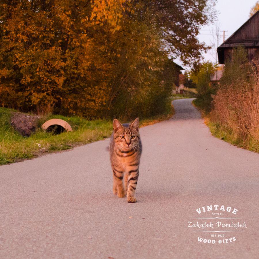 Nasz Kotek Maksiu z Fundacji Felineus
