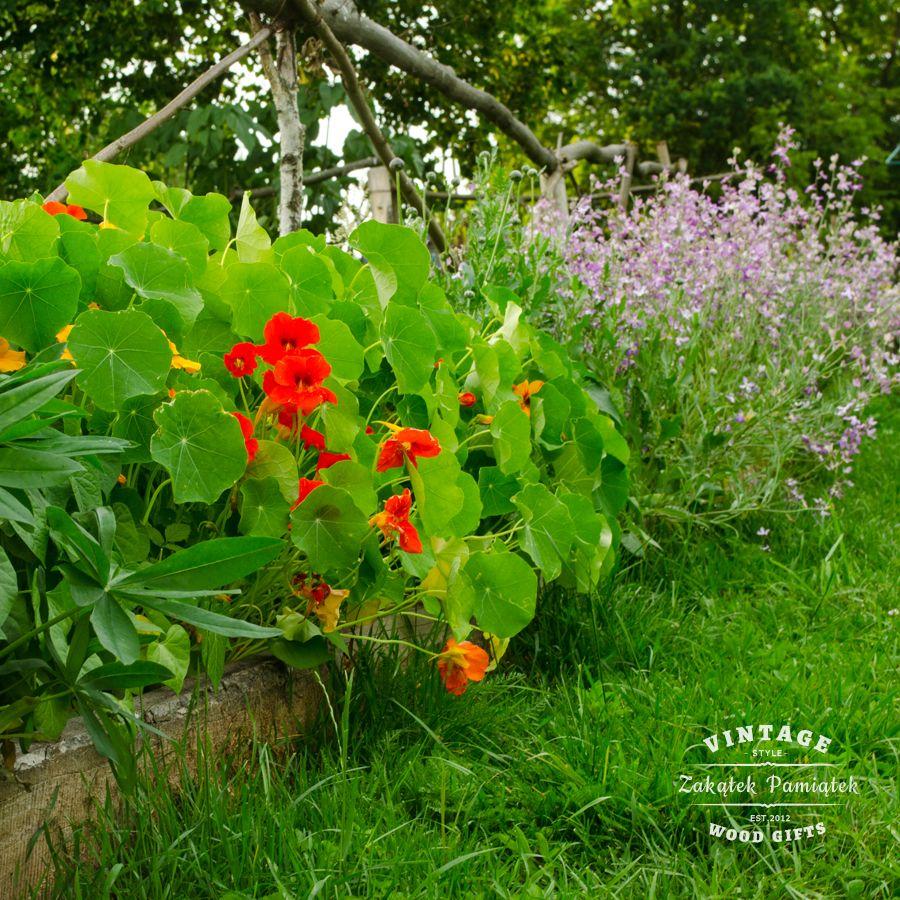 Na dobranoc wieści z ogrodu