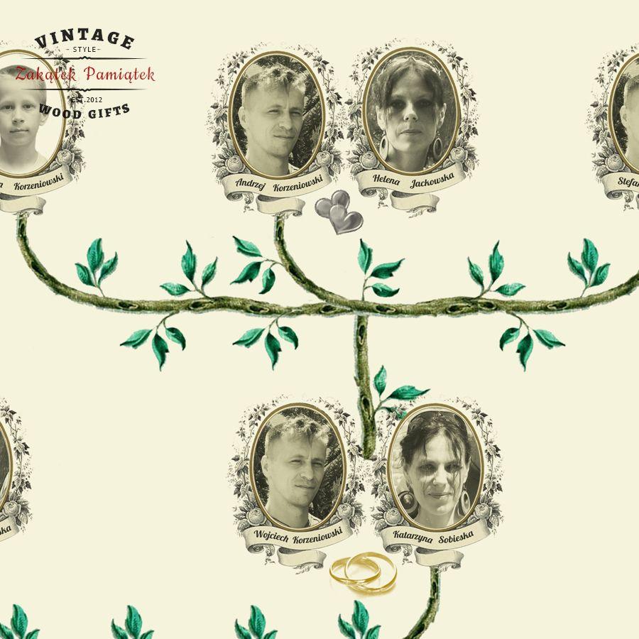 Kuferek biały drzewo genealogiczne