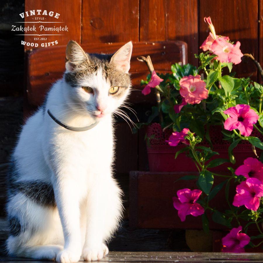 ogród, surfinie, kot