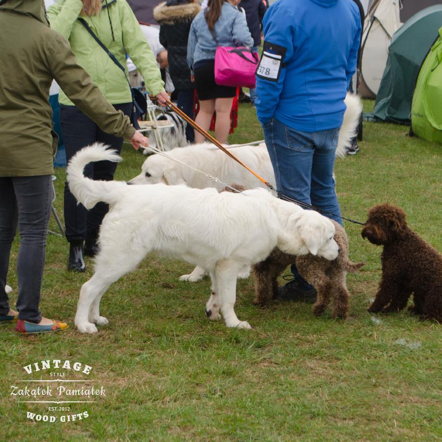 Międzynarodowa wystawa psów CACIB PRESTIGE